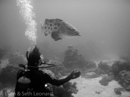 Ellen diving on the Great Barrier Reef