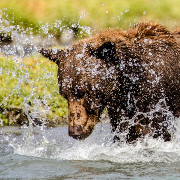 Bear and spray