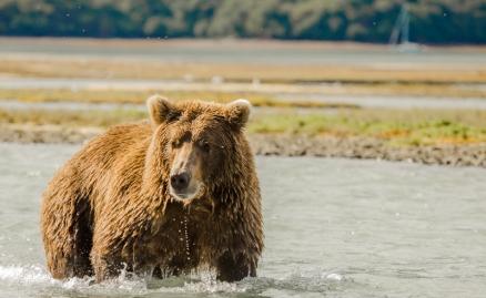Brown bear and Celeste