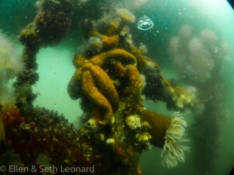 Underwater life in the Bering Sea