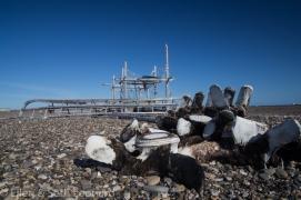 Whale vertebrae and fishing camp