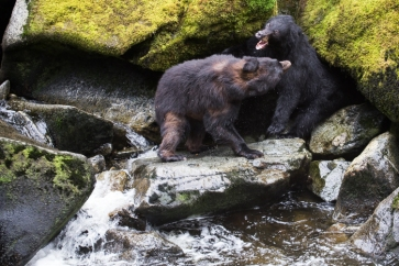-My fishing spot!- Black bear altercation