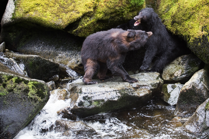 -My fishing spot!- Black bear altercation