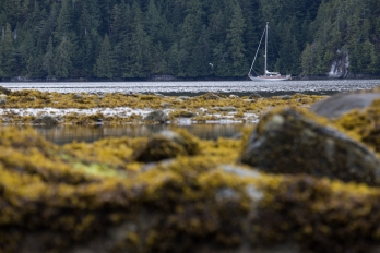 Anchored in BC