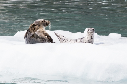 Baby and Mom seal