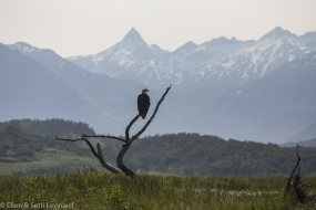 Eagle and mountains