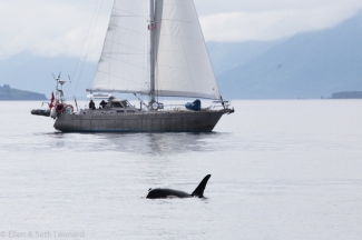 Canadian boat and orca