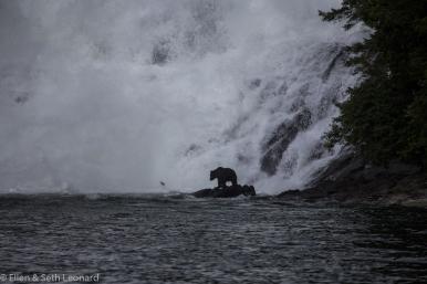 Fishing bear