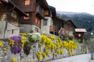 Alpine village flowers