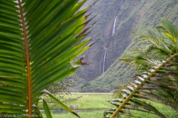 Beautiful Hawaii-3