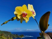 Orchid and view
